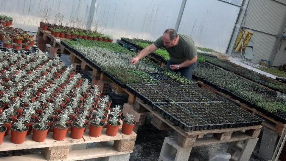 Ecoplanter - Argençola