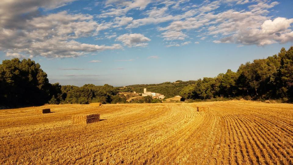 11.07.2014 paisatge després de la sega  Contrast -  Ramon Sunyer