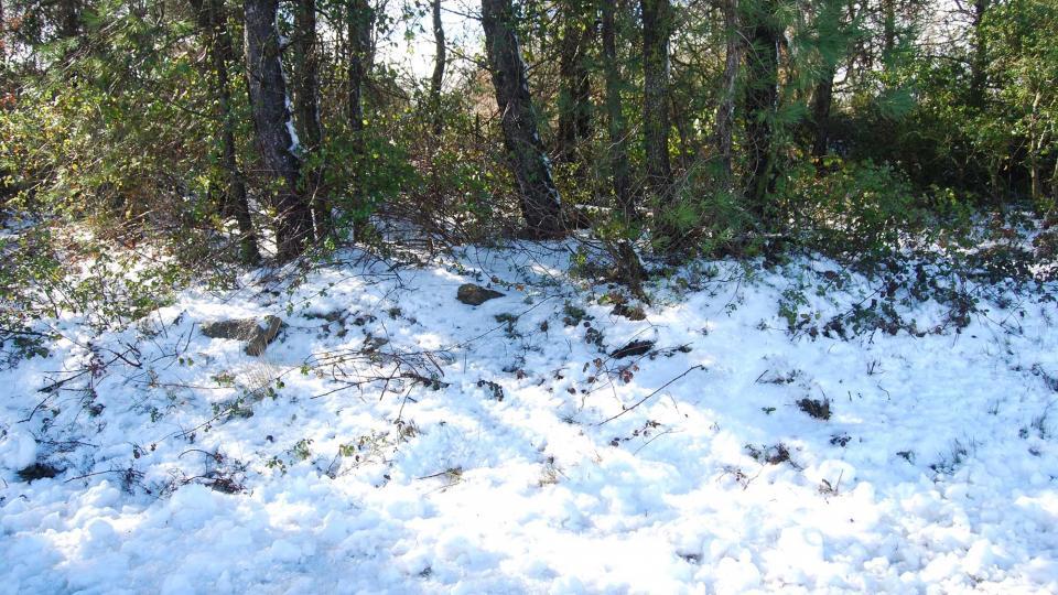 28.02.2016 restes de neu als obacs  Carbasí -  Ramon Sunyer