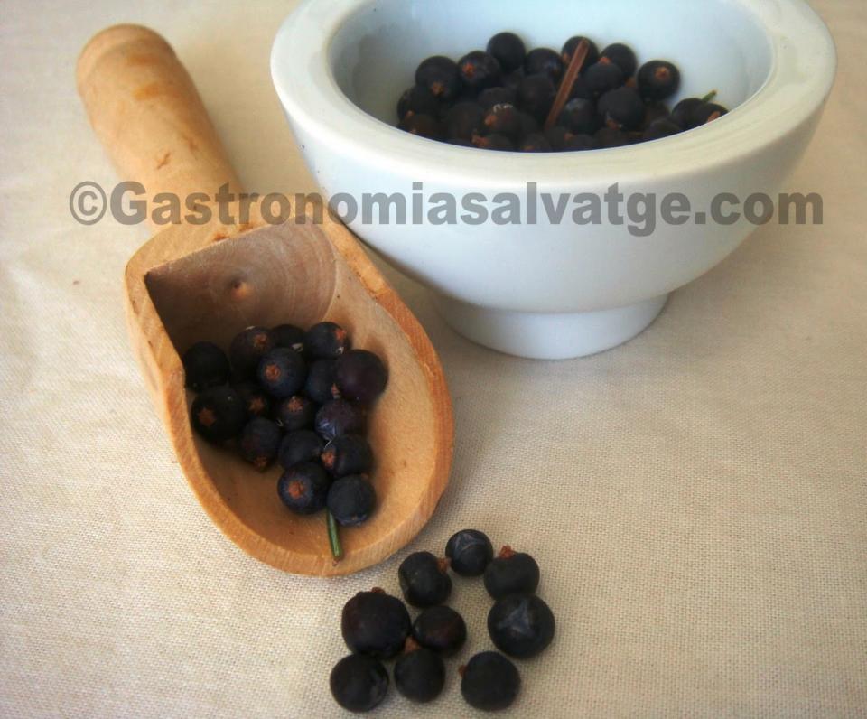 Fruits del ginebró - Argençola