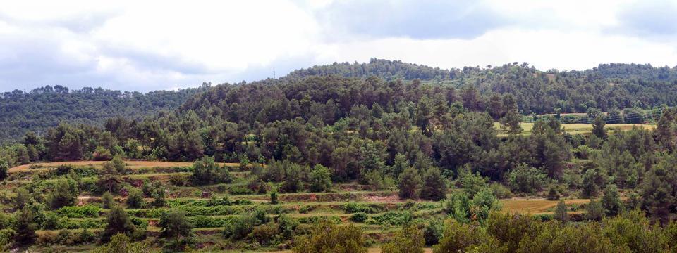 11.06.2016 boscos  Porquerisses -  Ramon Sunyer