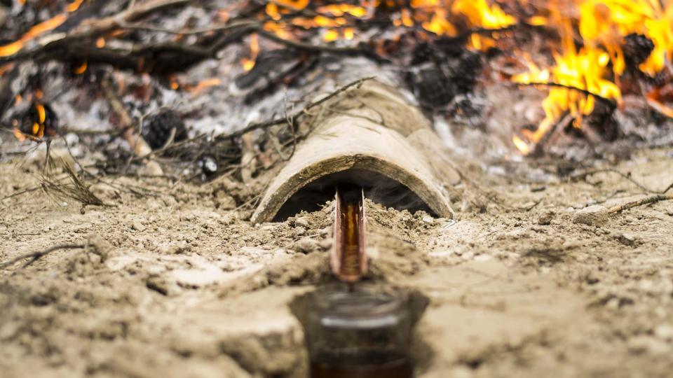 11.06.2016 Obtenció d'oli de ginebró  Argençola -  Txetxu Sanz