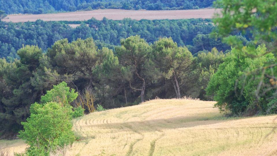 11.06.2016 paisatge  Rocamora -  Ramon Sunyer
