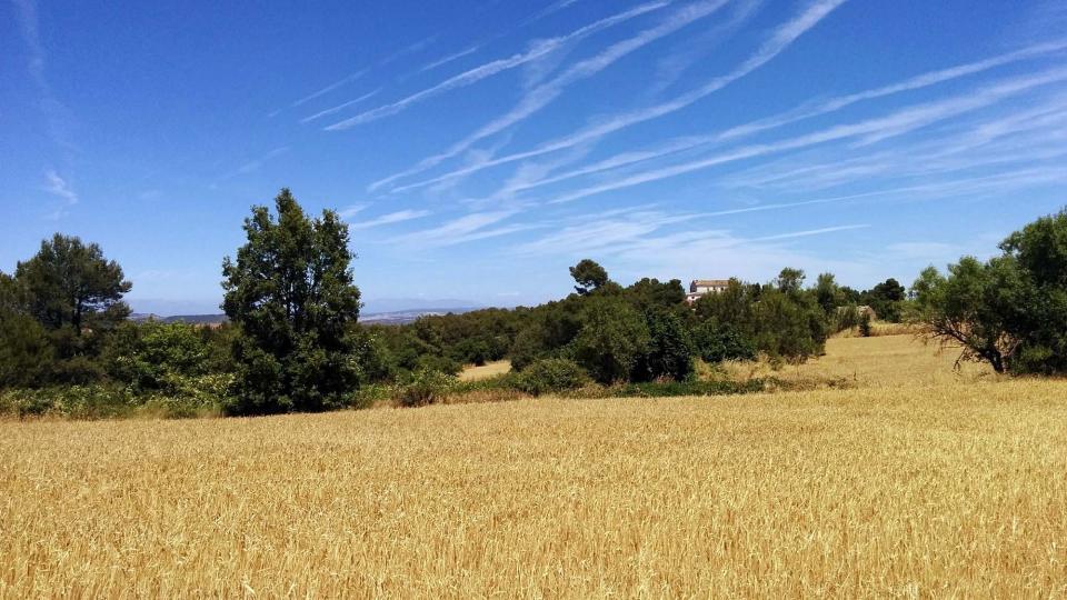 03.07.2016 paisatge  Els Plans de Ferran -  Ramon  Sunyer