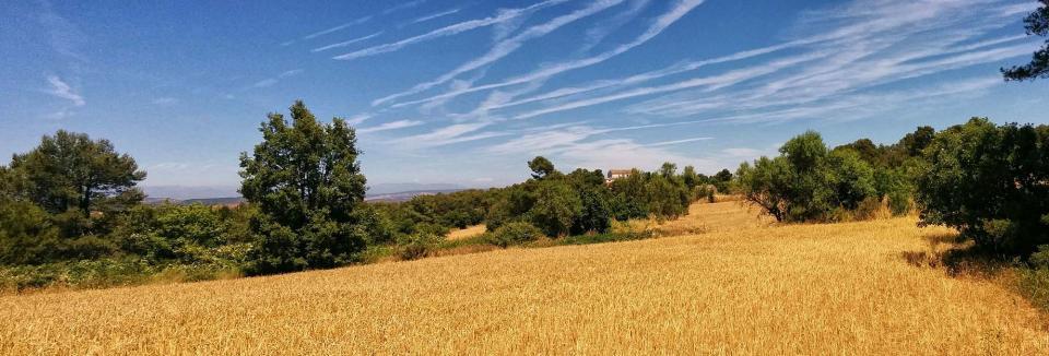 03.07.2016   Els Plans de Ferran -  Ramon Sunyer