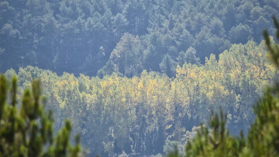 23.10.2016 paisatge  Carbasí -  Ramon Sunyer