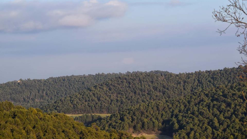 25.02.2017 boscos  Rocamora -  Ramon  Sunyer