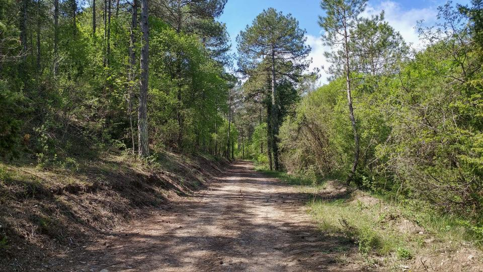 17.04.2017 boscos  Argençola -  Marina Berenguer