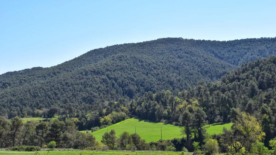 10.04.2017 boscos  Clariana -  Ramon Sunyer