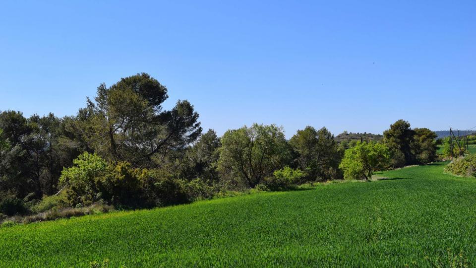 10.04.2017 paisatge  Argençola -  Ramon Sunyer