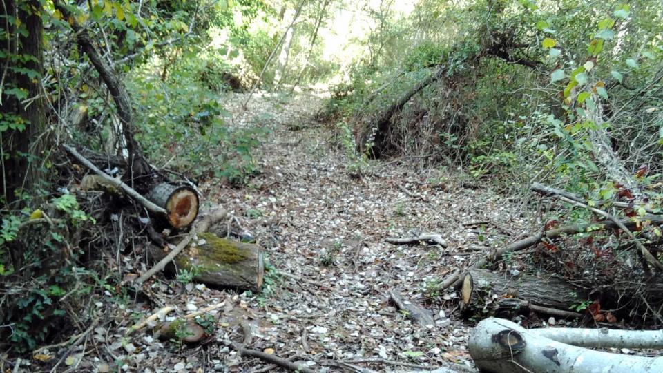 Treballs de neteja del bosc a la riera de Clariana - Argençola