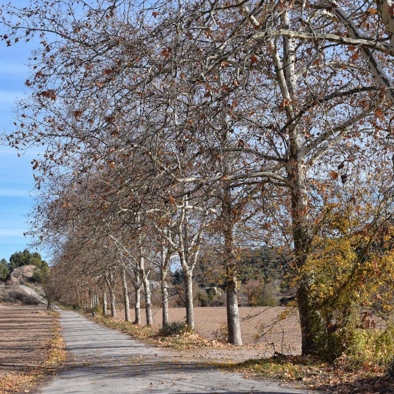 27.11.2017 plataners del camí ignasià  Porquerisses -  Ramon  Sunyer
