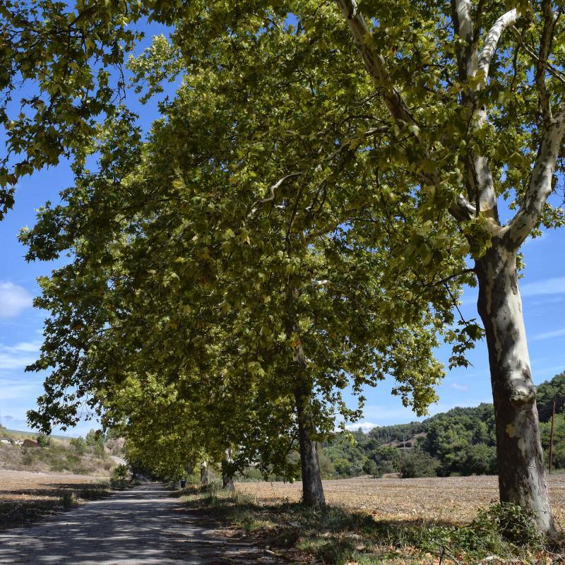 16.09.2017 Plataners del camí ignasià  Porquerisses -  Ramon Sunyet