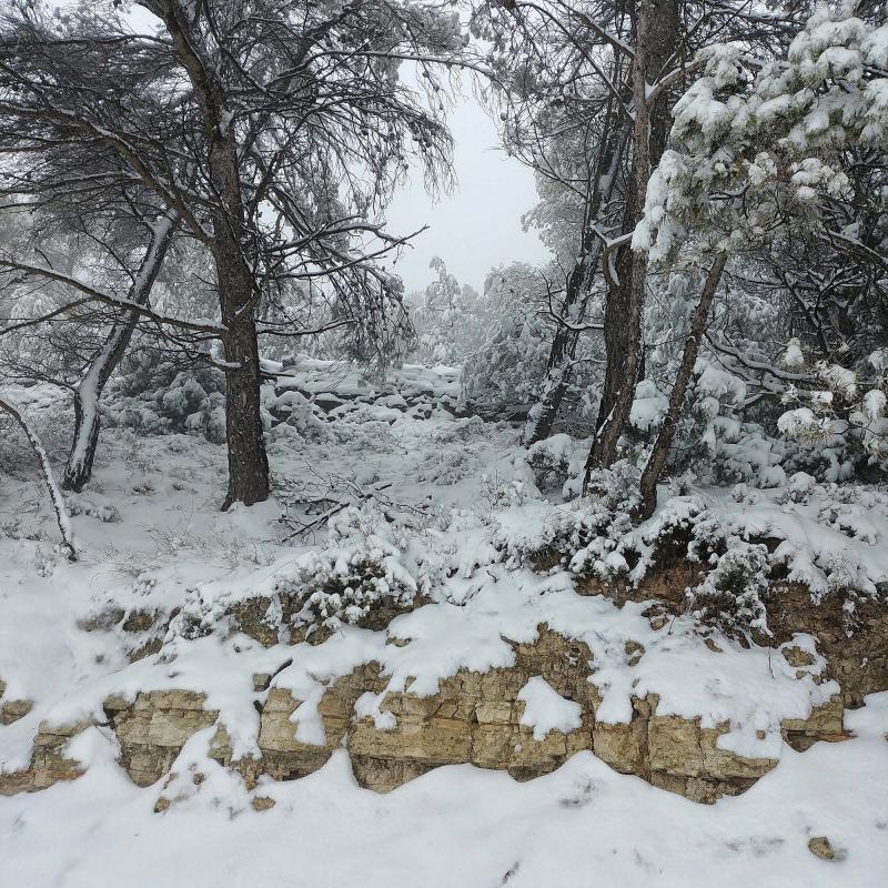 28.02.2018 Boscos  Argençola -  Martí Garrancho