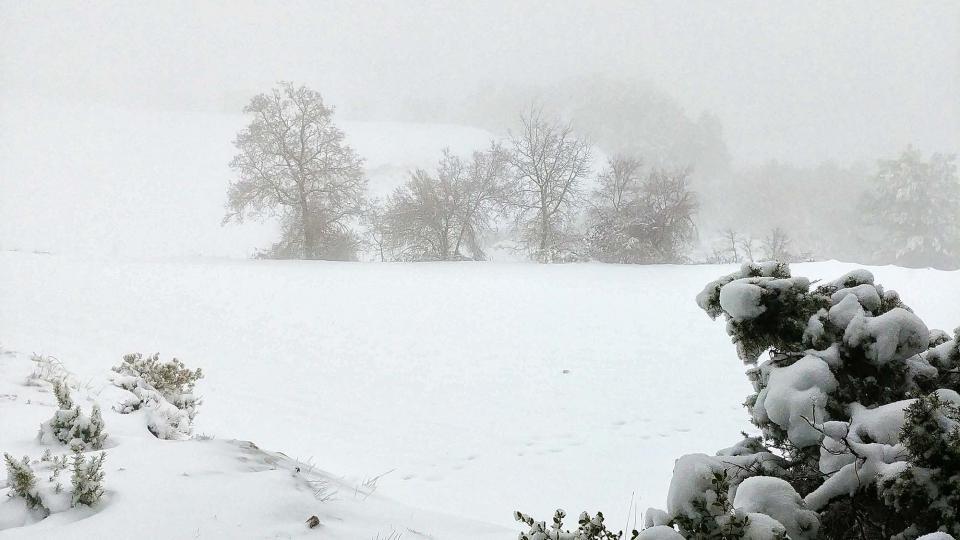 La neu