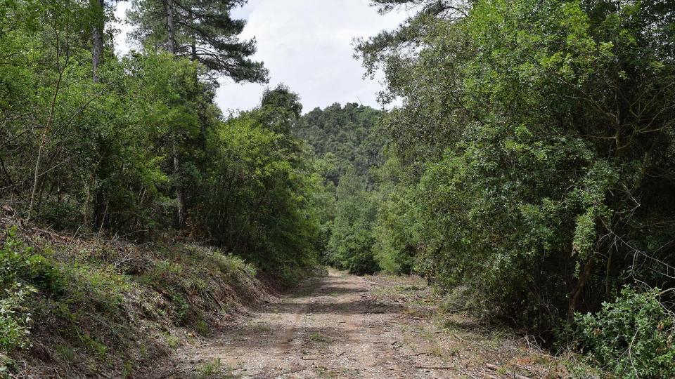 10.06.2018 boscos  Porquerisses -  Ramon Sunyer