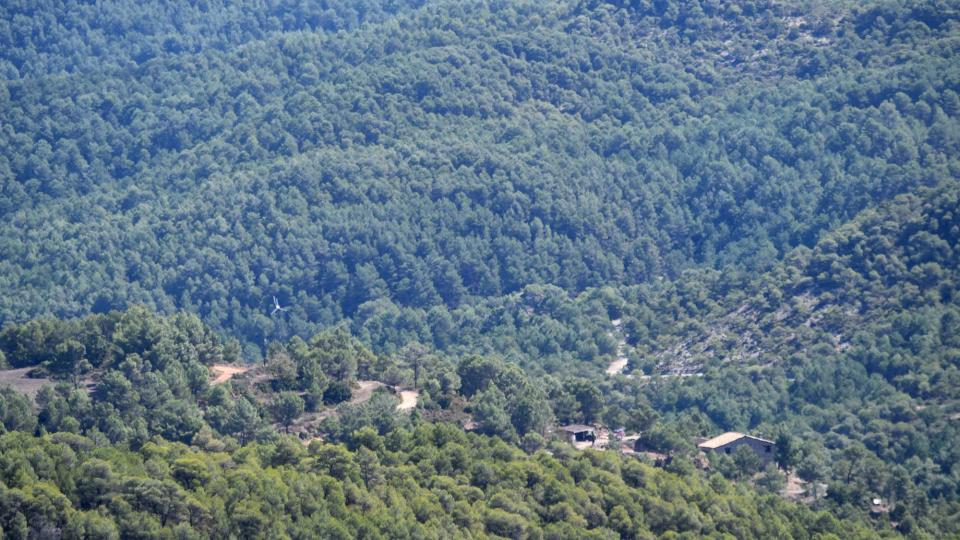 Els boscos són molt abundants al municipi d'Argençola