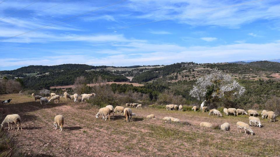 03.03.2019 el ramat de cal Serrats  Argençola -  Ramon Sunyer