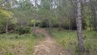 Argençola: boscos  Marina Berenguer