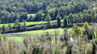Rocamora: Boscos  Ramon Sunyer