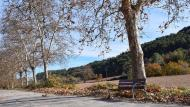 Porquerisses: plataners del camí ignasià  Ramon  Sunyer