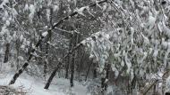 Argençola: Boscos  Martí Garrancho