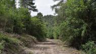 Porquerisses: boscos  Ramon Sunyer