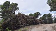 Porquerisses: aprofitament forestal  Ramon Sunyer