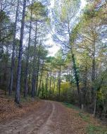 Argençola: Els boscos a la tardor  Marina Berenguer